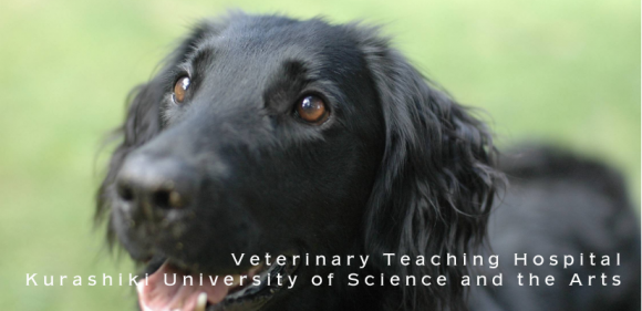 Veterinary Teaching Hospital cover photo